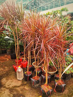 Các loại cây hoàn kiếm tại vườn